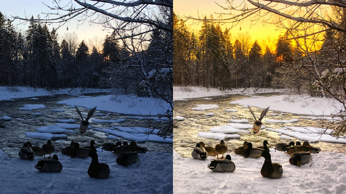 before after image editing winter ducks by the river